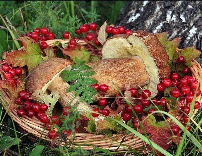 Собирать грибы, ягоды