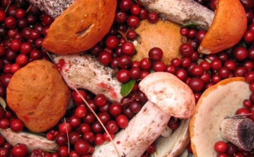 Грибы и ягоды собирают в лесах
