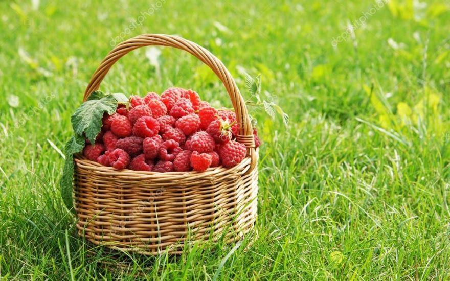 Лесные ягоды собраны - малина