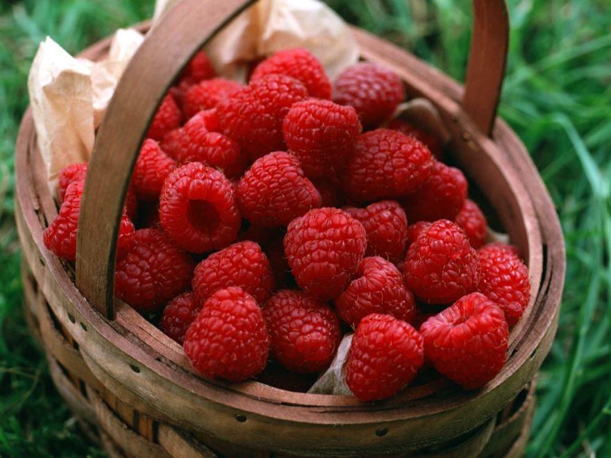 В лесу можно собирать ягоды малины