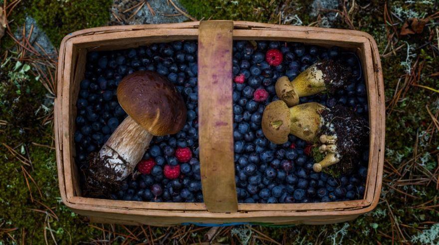 Какие грибы и ягоды собирают?