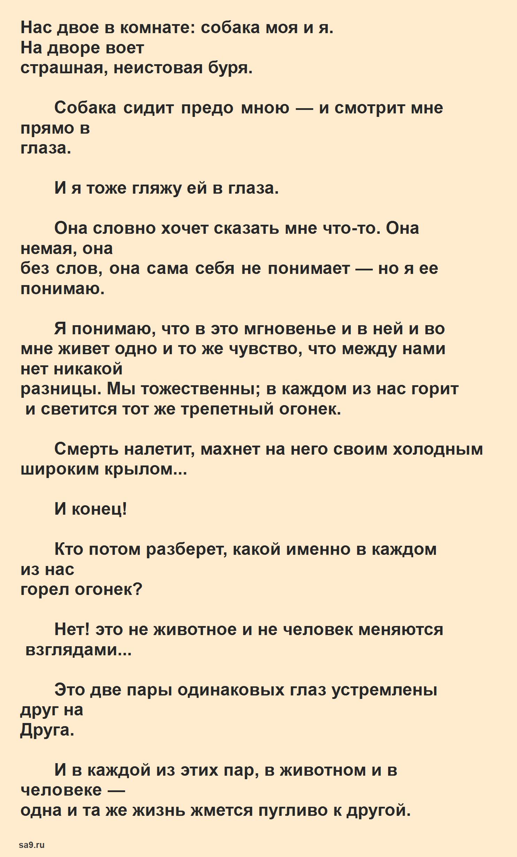Стихи Тургенева в прозе - Собака