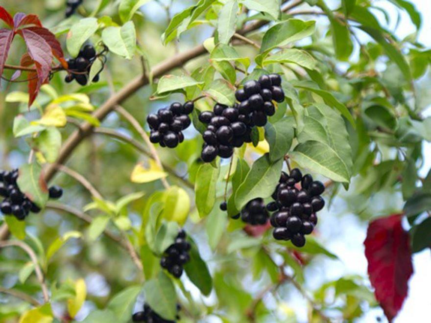 Дикие, лесные ягоды