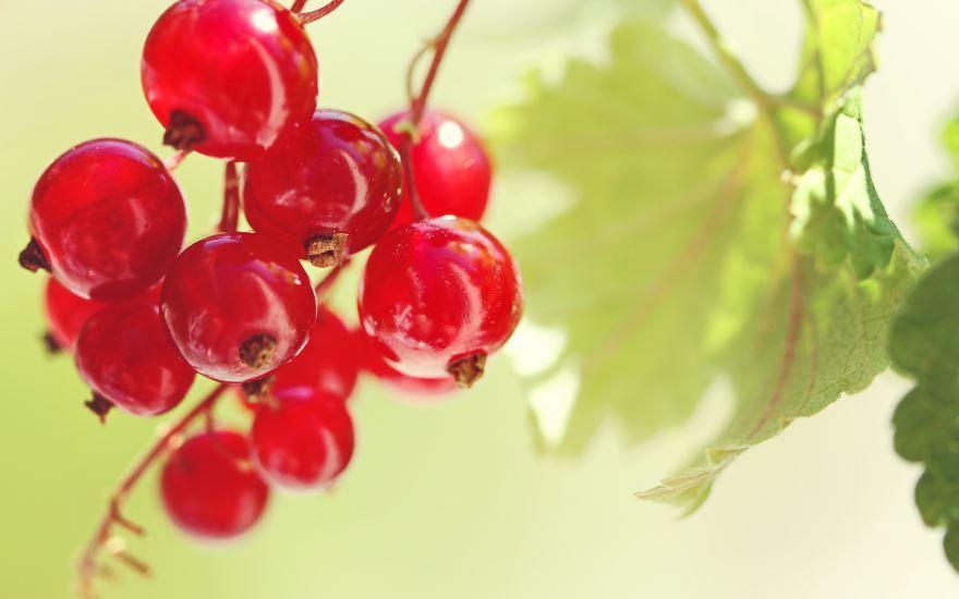 В саду растут ягоды - красная смородина