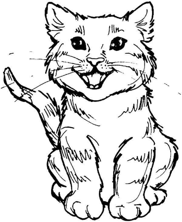 Раскраска кот для мальчиков и девочек