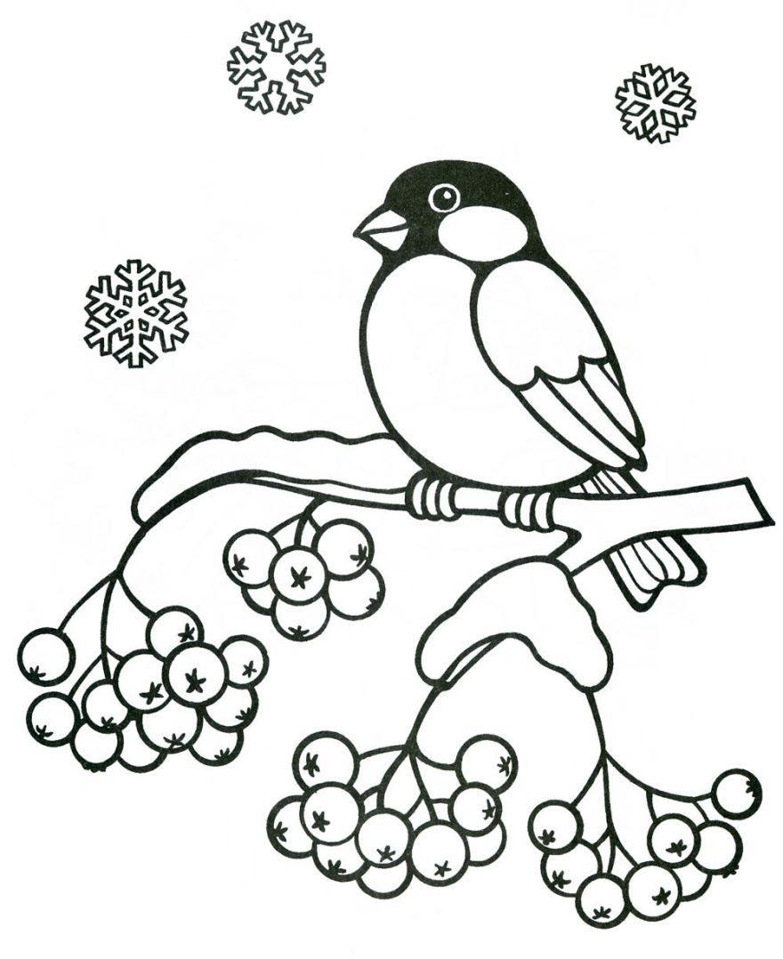 Раскраска птицы зимой, распечатать бесплатно