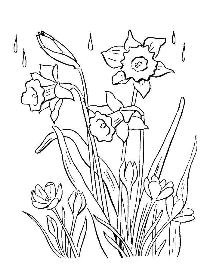 Скачать раскраску - Весна, для детей