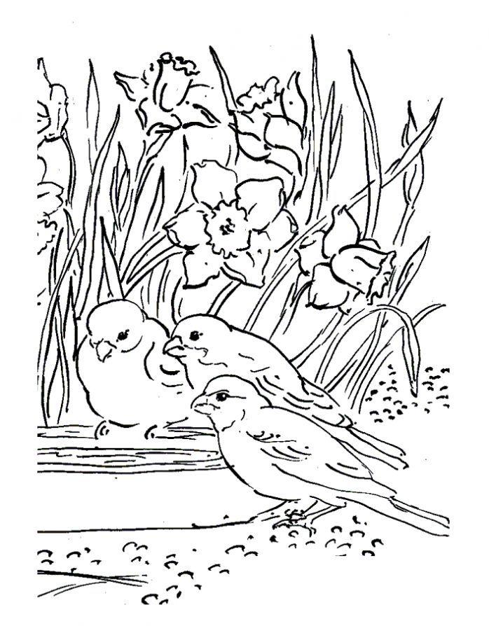 Раскраски на тему - Весна