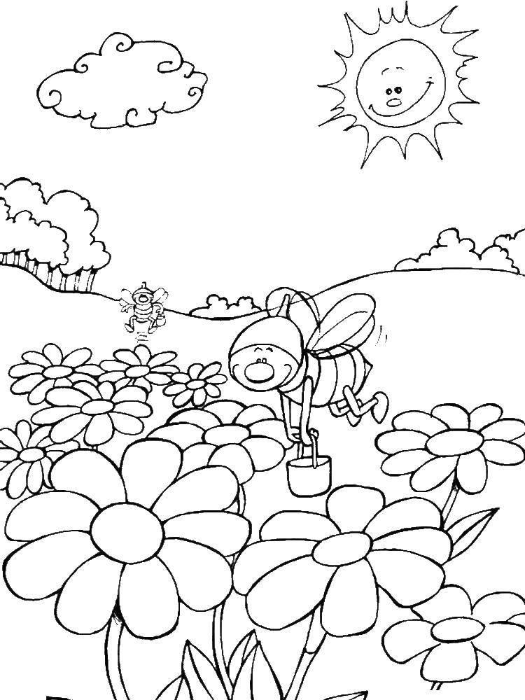 Скачать и распечатать раскраски лето, бесплатно
