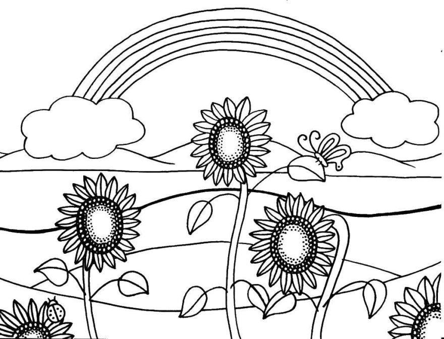 Раскраски цветы лета