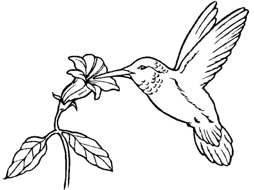 Раскраска птицы, для детей