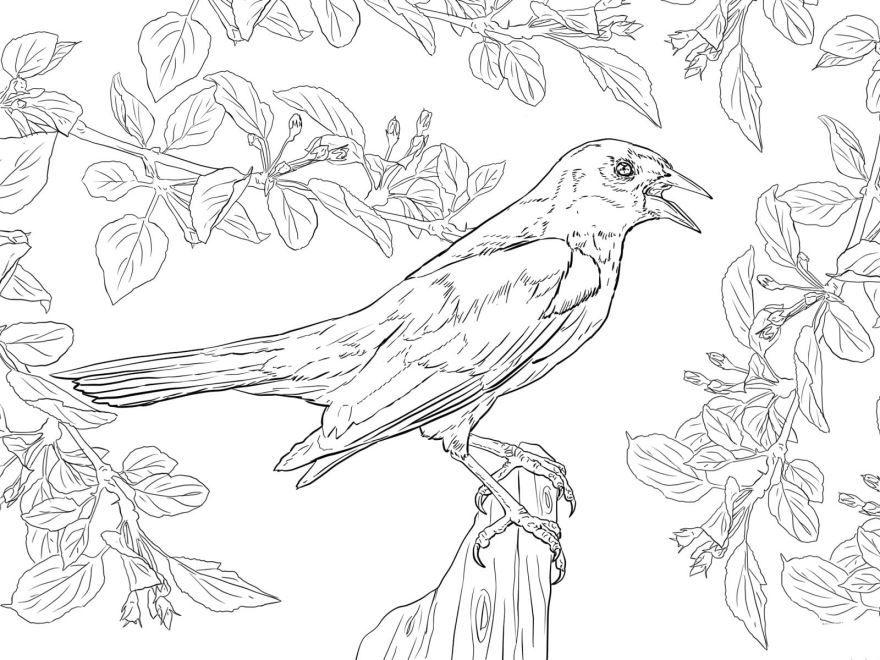 Раскраски птицы, распечатать
