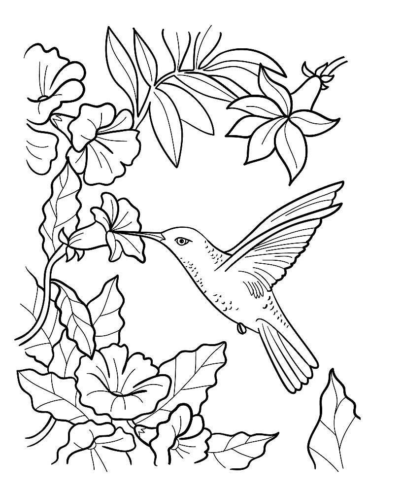 Раскраска птицы для детей 5 лет