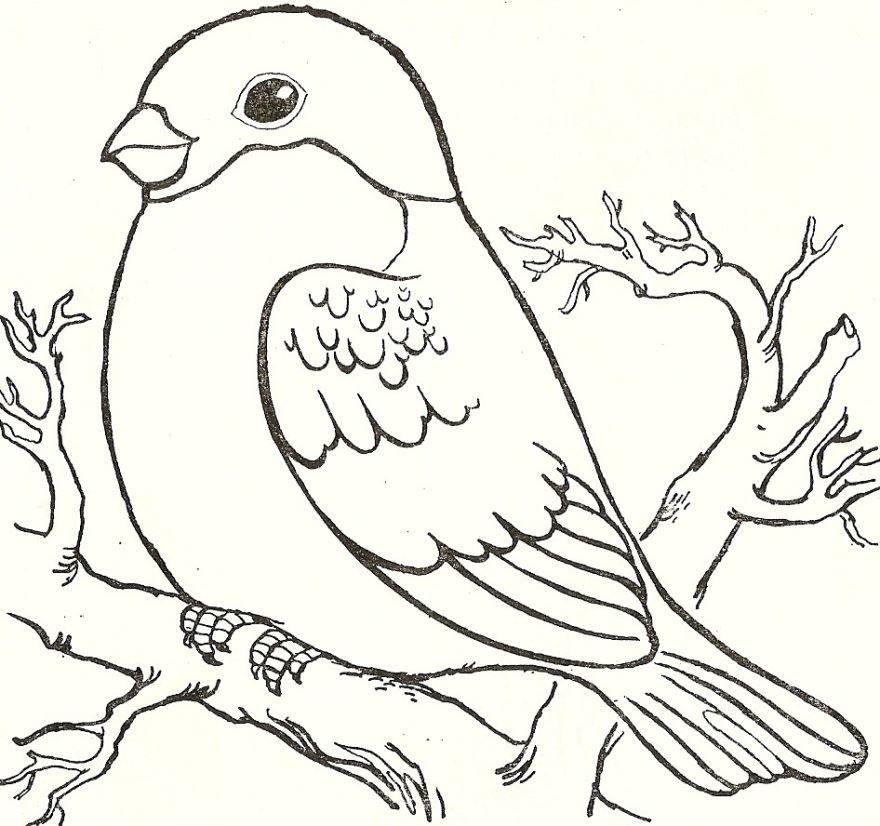 Раскраска зимующие птицы, для детей