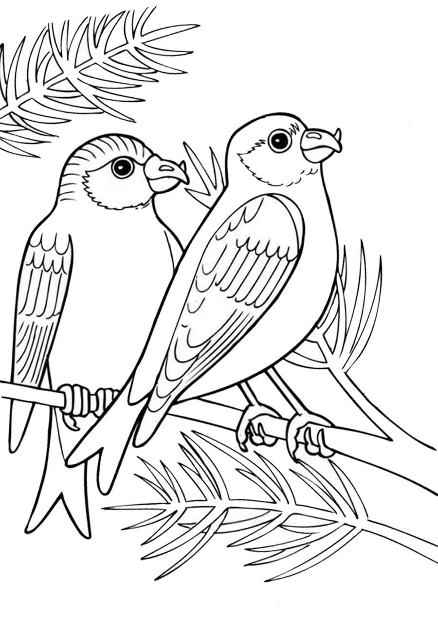 Раскраска птицы, онлайн распечатать