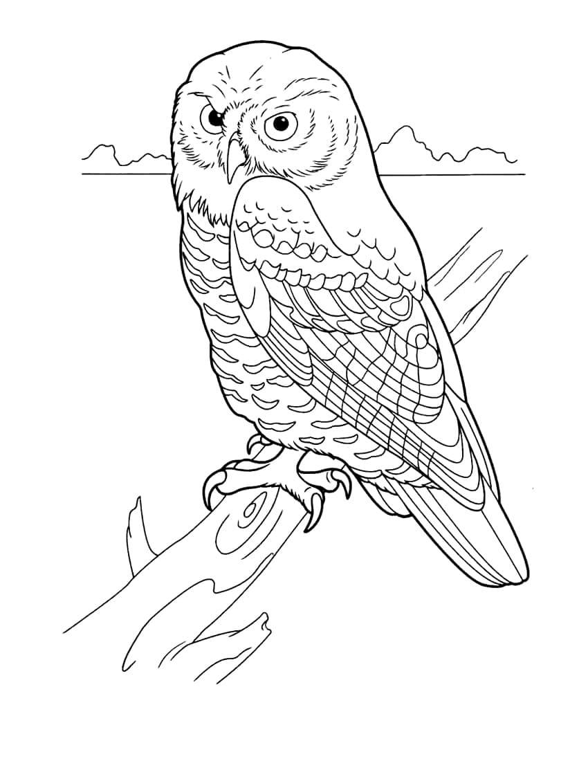 Раскраска птицы - Сова