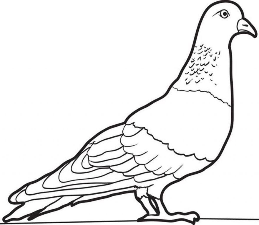 Раскраска птицы - Голубь