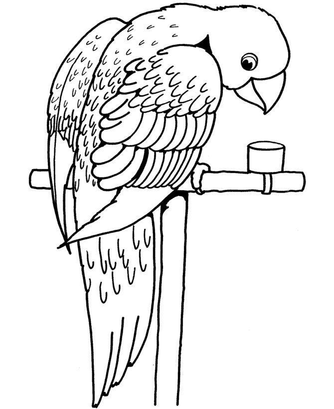 Раскраска домашние птицы - Попугай