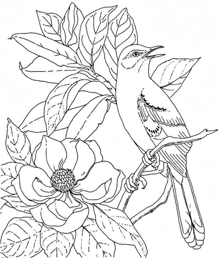 Раскраска птицы, скачать и распечатать бесплатно
