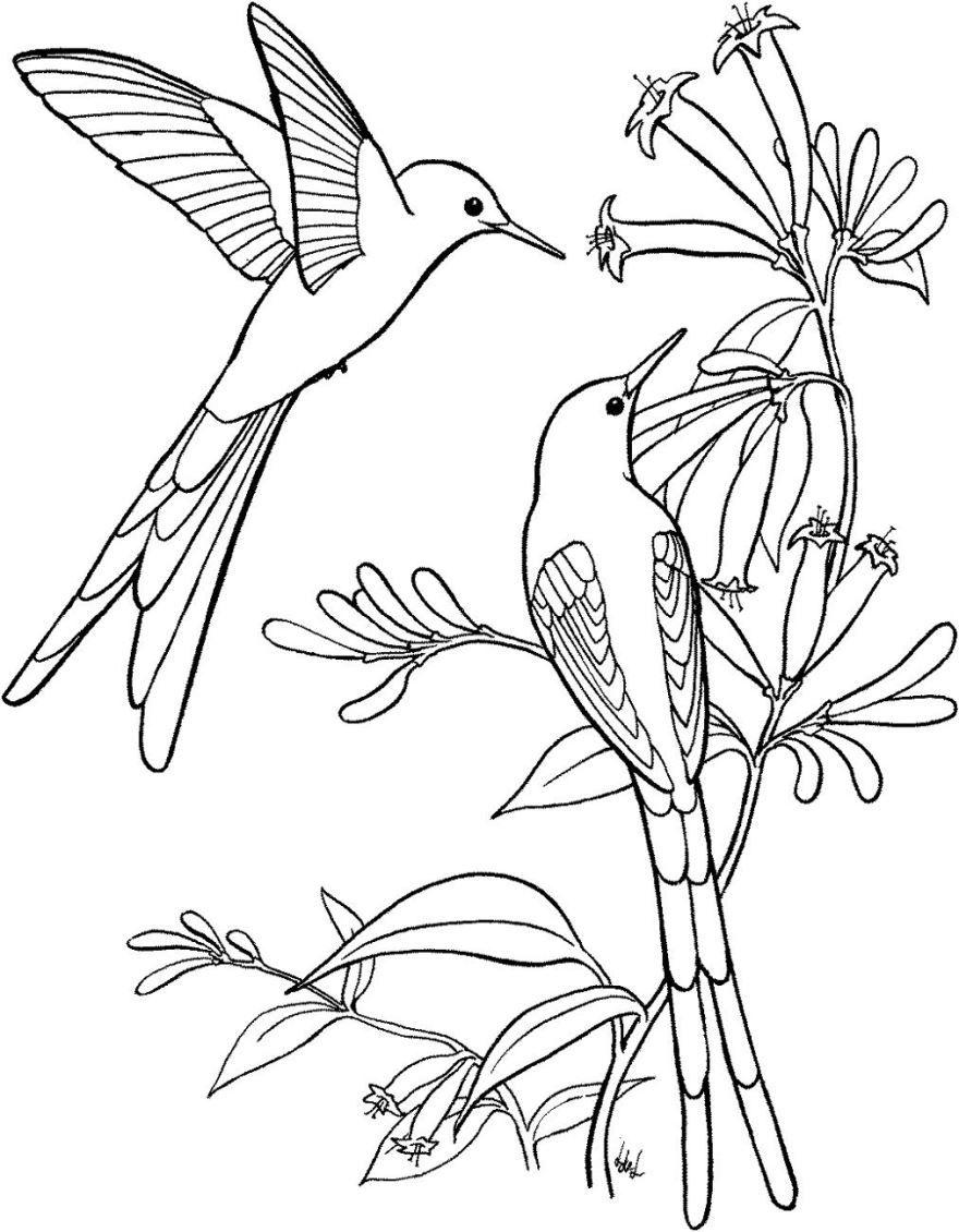 Распечатать раскраску - Птицы