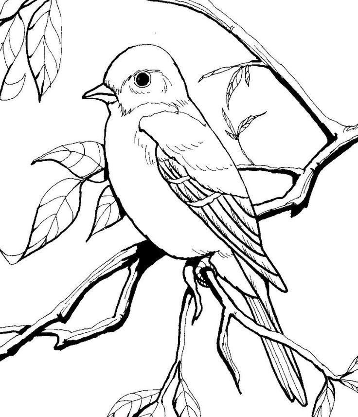 Птица картинка раскраска для детей
