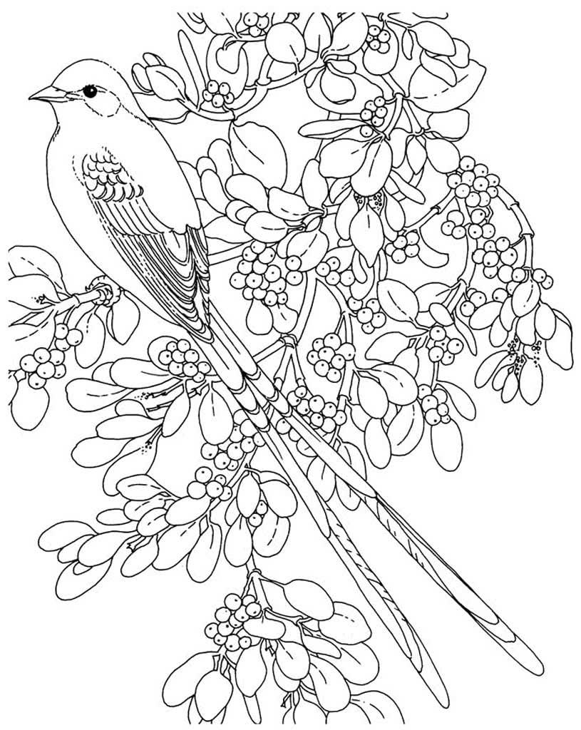 Раскраски для детей - птицы