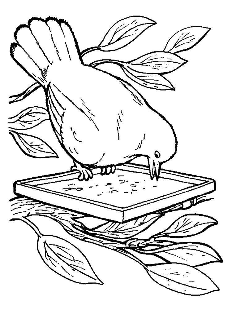 Раскраска кормушка для птиц