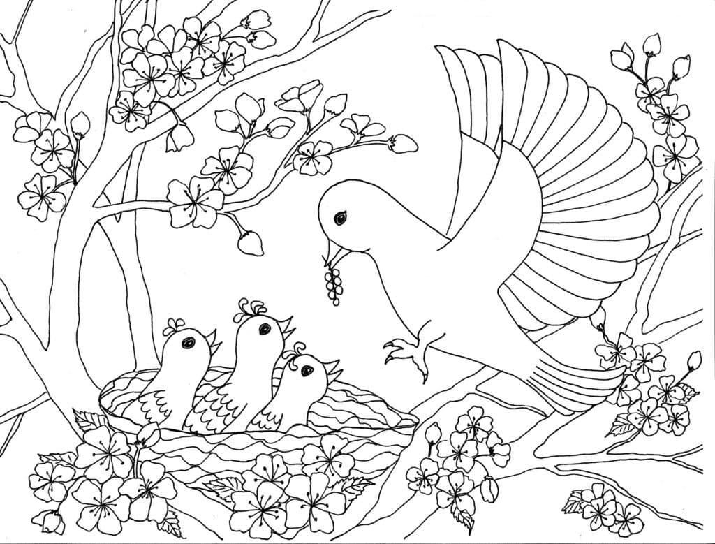 Раскраска для мальчиков и девочек - Птицы