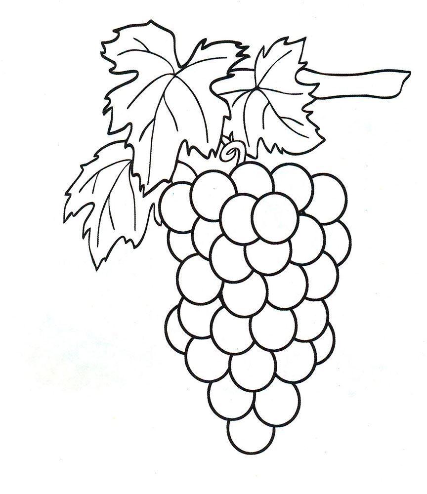 Фрукты раскраска для детей - виноград