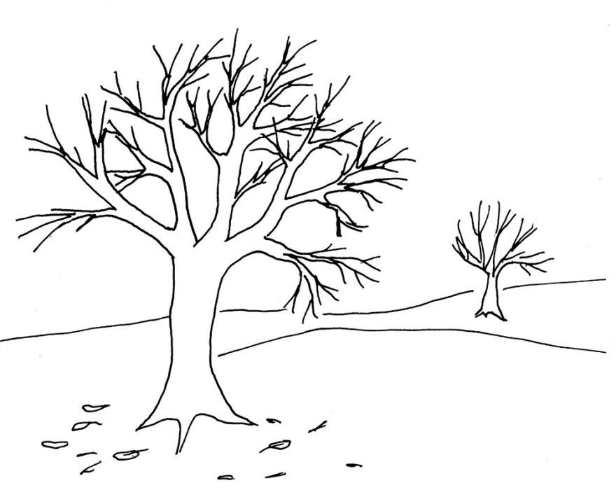 Раскраски деревья зимой