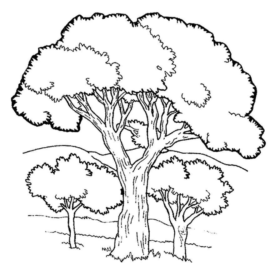 Скачать и распечатать раскраску для детей - дерево