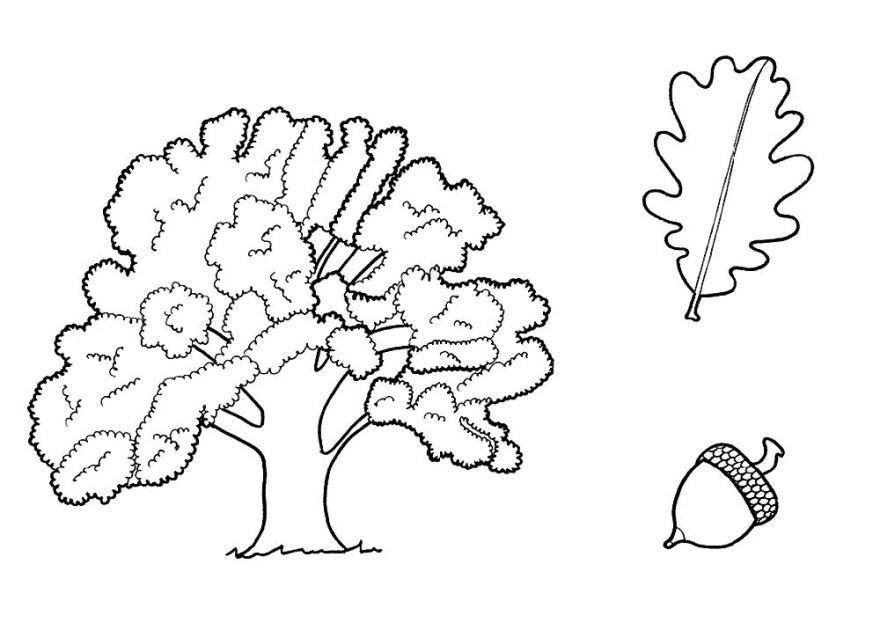 Раскраска листьев деревьев