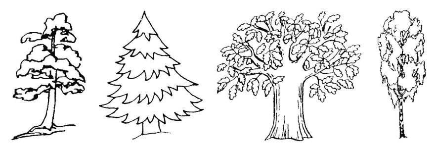 Раскраски деревья для детей