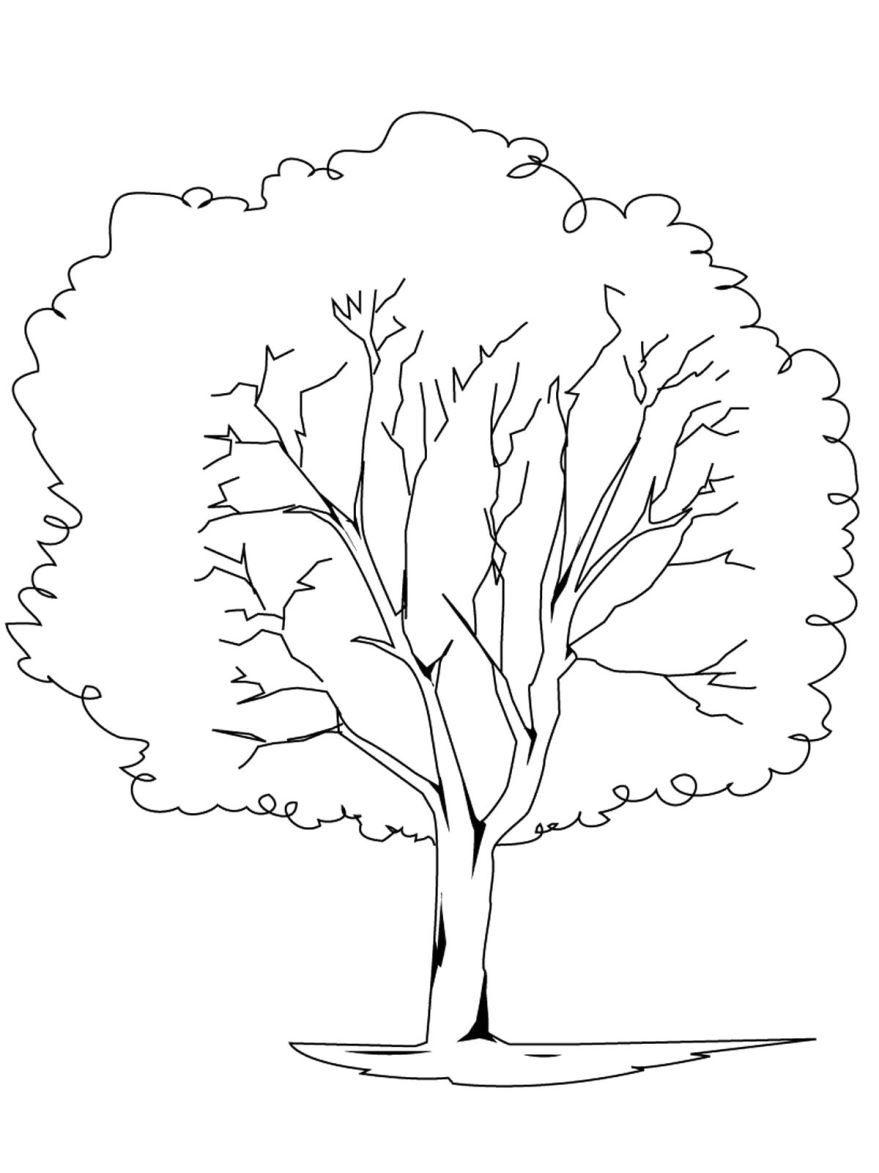 Дерево картинка для детей, раскраска