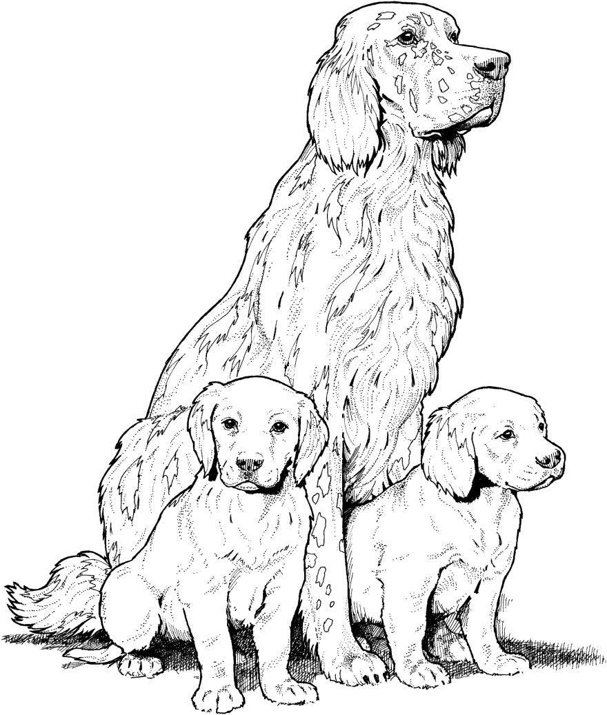 Раскраски собаки и щенки, распечатать