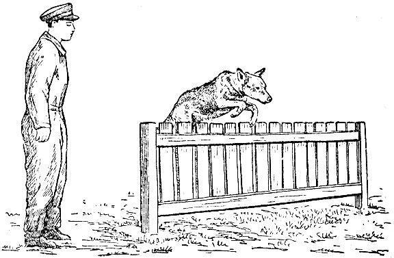 Раскраска пограничник с собакой, для детей