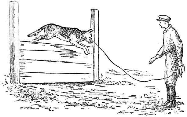 Пограничник с собакой, раскраска