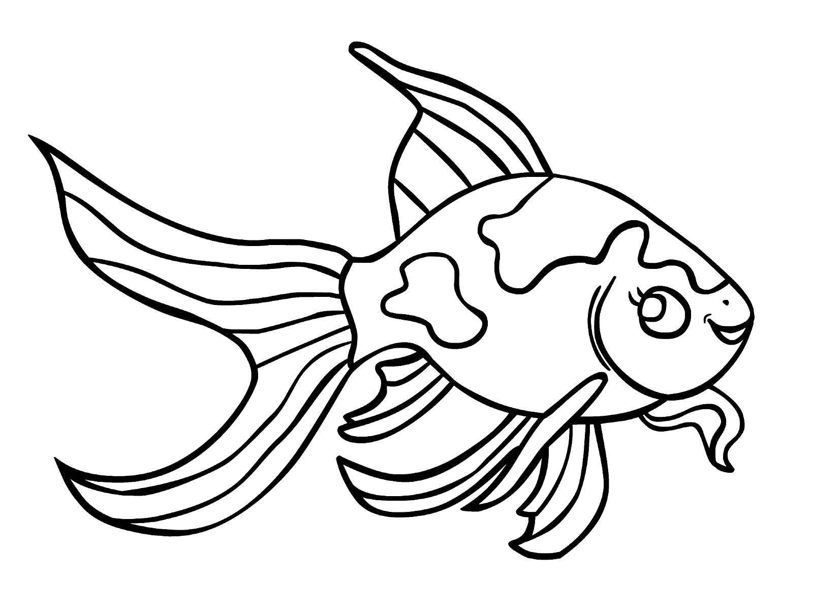 Золотая рыбка раскраска для детей