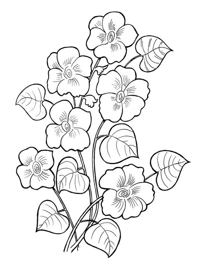 Раскраска цветы, скачать бесплатно