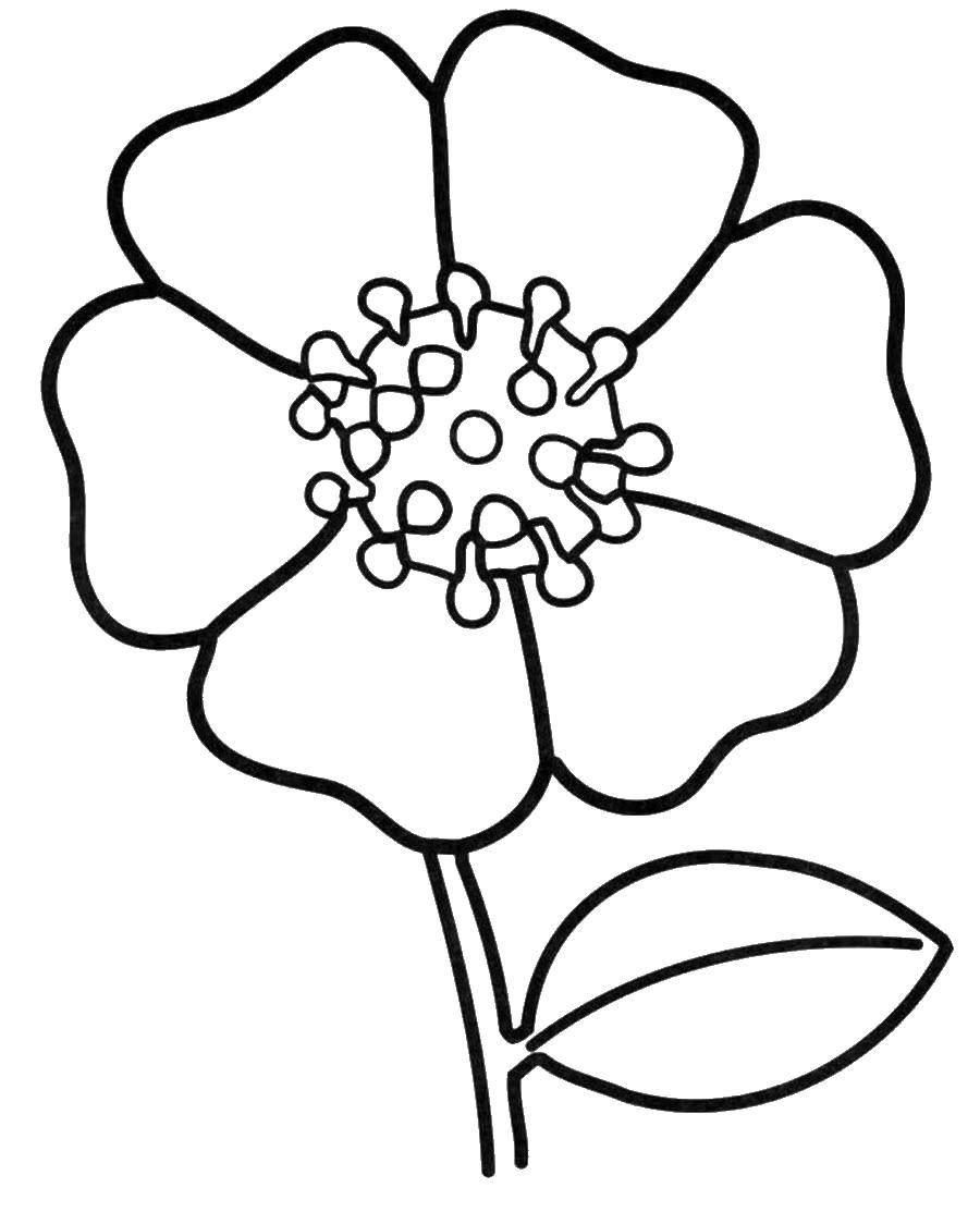Раскраска цветы крупные, красивые