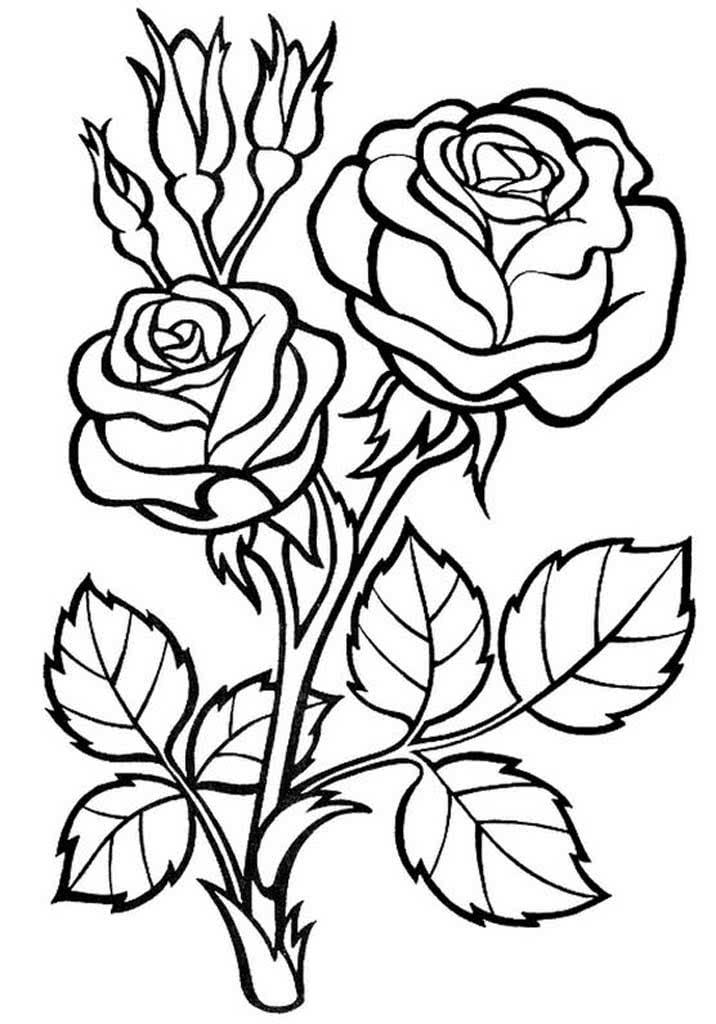 Раскраска цветы - розы