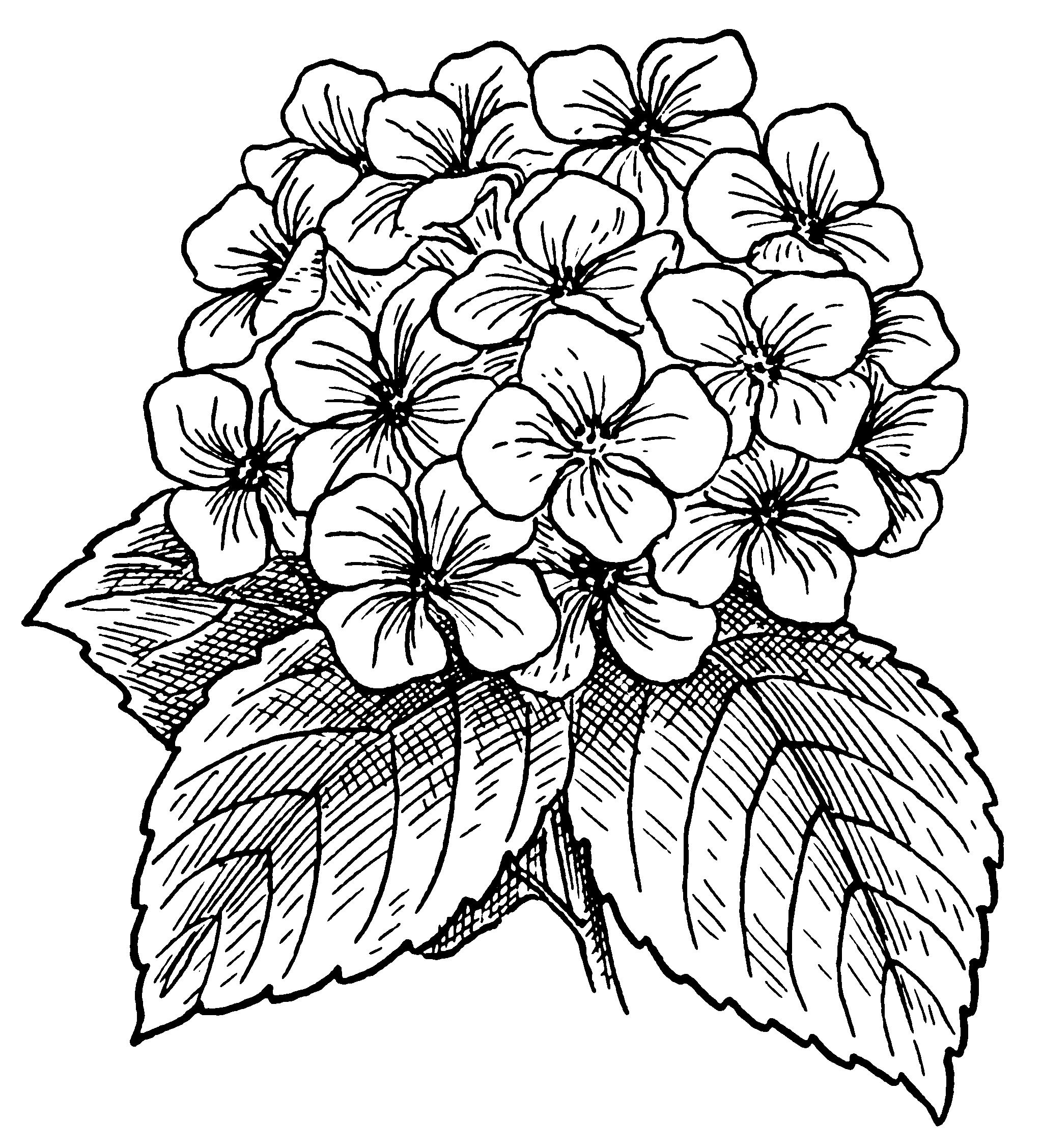 Букет цветов раскраска для детей
