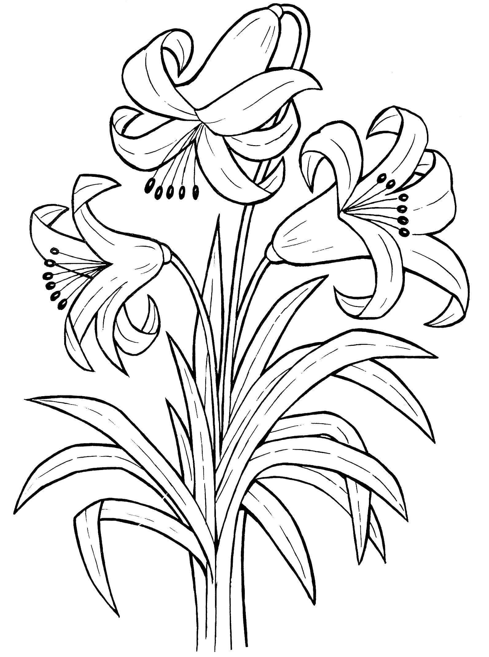 Букет цветов раскраски, распечатать бесплатно