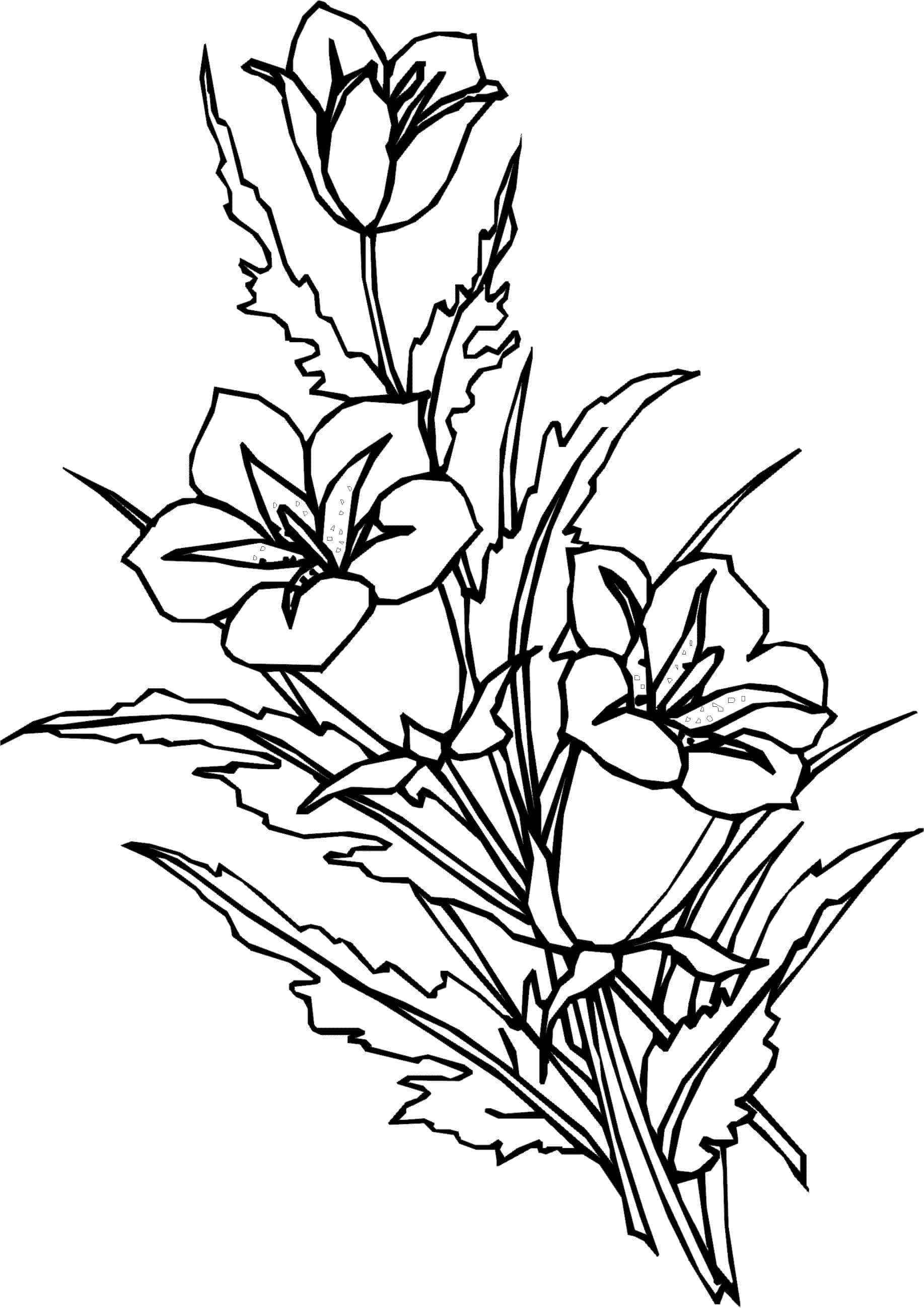 Раскраска цветы красивые