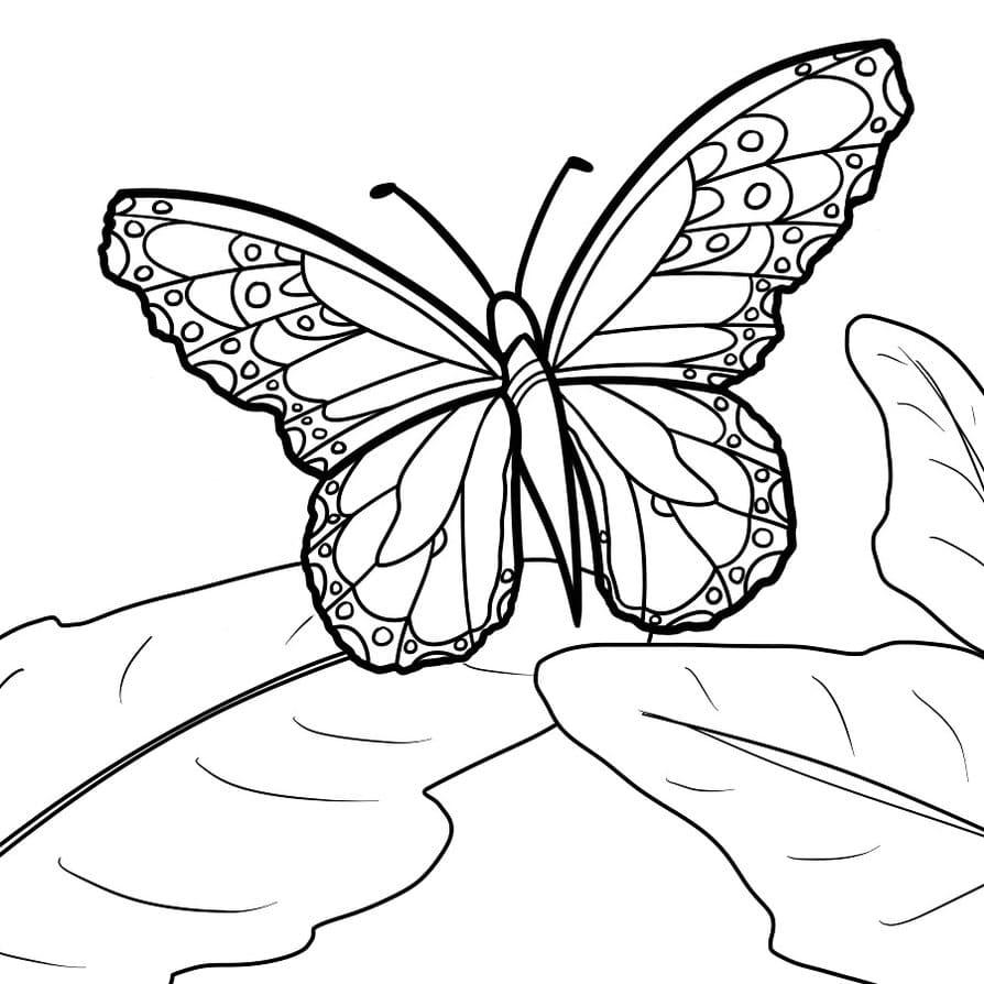 Скачать и распечатать раскраску бабочка