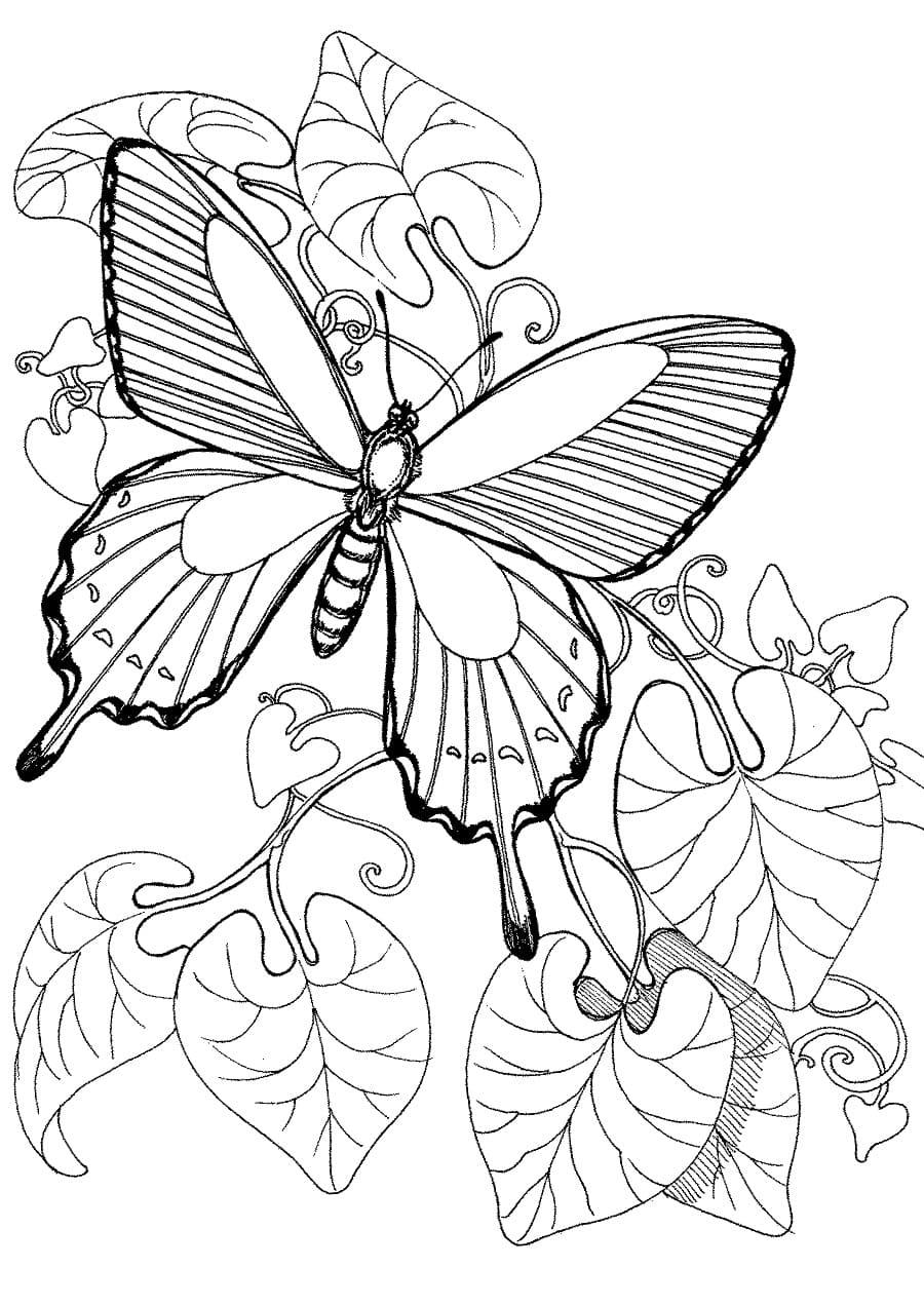 Распечатать раскраски с бабочками для детей