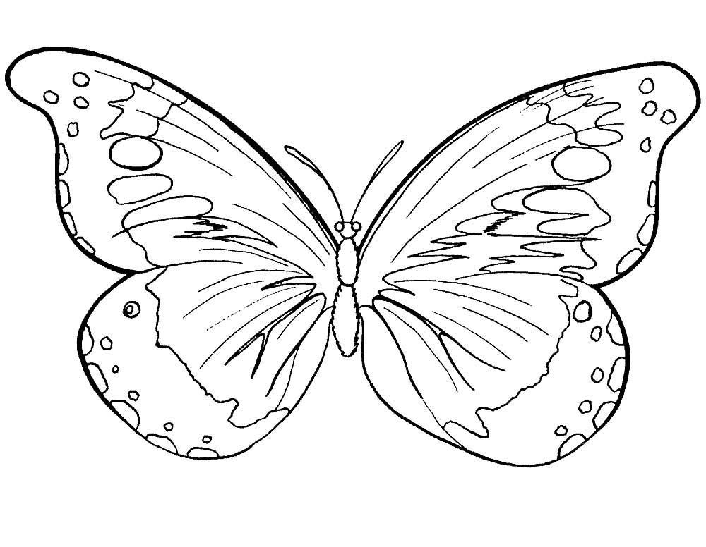 Раскраска бабочка для девочек и мальчиков