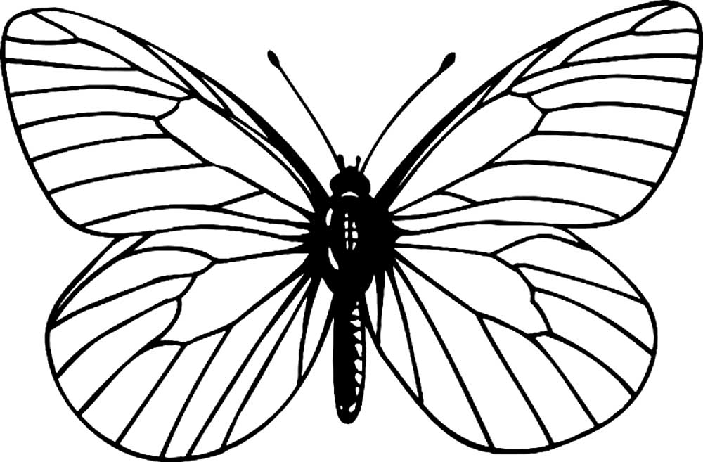 Бабочка раскраска для детей