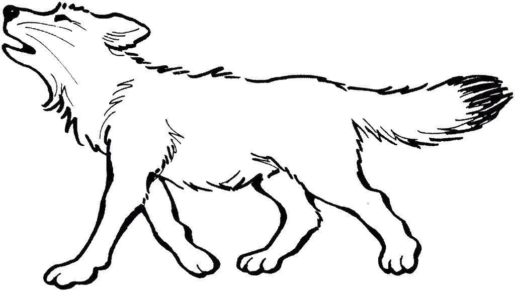 Раскраска волк, для мальчиков и девочек