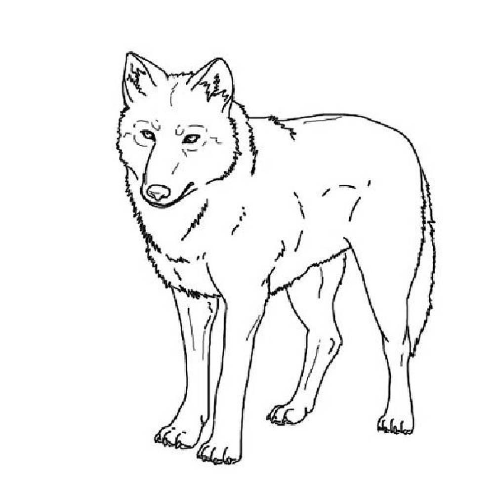 Распечатать раскраску про волка, бесплатно